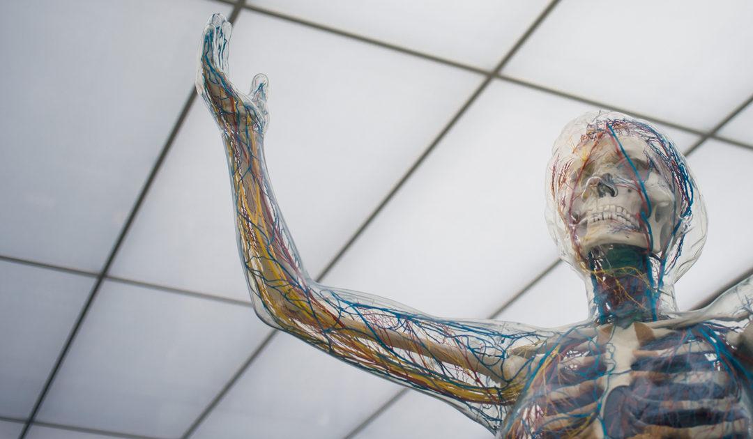 5 choses à savoir sur les nerfs